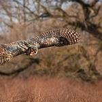 Mój święty spokój - ptaki - fot. Marian Miełek (4)