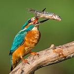 Mój święty spokój - ptaki - fot. Marian Miełek (7)