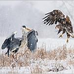 Mój święty spokój - ptaki - fot. Marian Miełek (9)