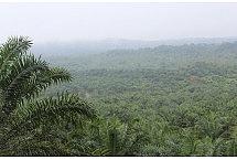 Po horyzont plantacja palmy