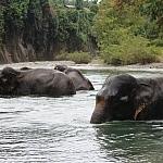 Słonie - największe ssaki Sumatry