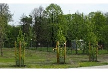 drzewa_park