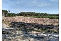 Uprawa leśna, foto: Rafał Szkopiński