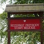 Stawy_foto_redakcja_dziennik_leśny018