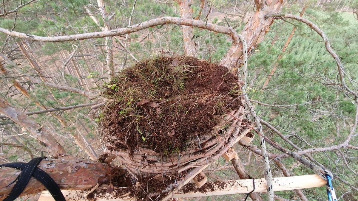Gniazdo gotowe na przybycie sokołów (fot. M. Urban)