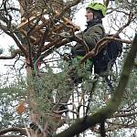 Montaż sztucznego gniazda na drzewie (fot. A. Traczyk)